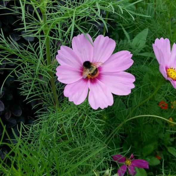 勤劳的小蜜蜂_周乐豆的美食日记
